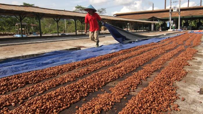 Manajer Perkebunan Kendeng Lembu Beni Hendricriyanto menunjukkan produk coklat hasil produksi di Dusun Kakao Glenmore, Perkebunan Kendeng Lembu, PTPN XII, Banyuwangi, Jawa Timur, Rabu (9/6/2021). Perkebunan Kendeng Lembu penghasil biji kakao itu selain mengekspor sebagian hasil panennya ke Jerman juga mampu memproduksi berbagai varian coklat untuk memperkenalkan Dusun kakao sebagai tempat wisata dan edukasi. ANTARA FOTO/Budi Candra Setya/wsj.