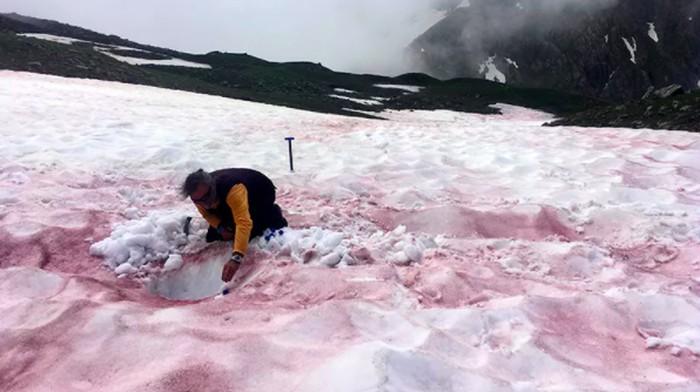 Seorang peneliti mengambil sampel salju yang tertutup darah gletser.