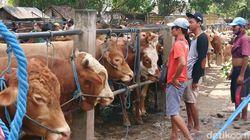 Kasus Antraks di Tulungagung Tak Berdampak pada Penjualan Hewan Kurban