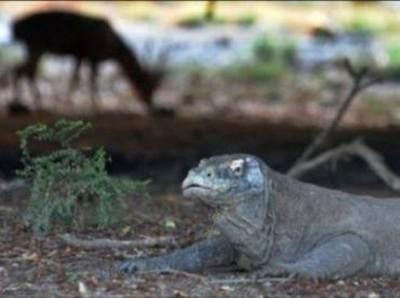 UNESCO Minta Pemerintah Indonesia Stop Proyek di Pulau Komodo