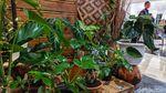 Berbagai Jenis Tanaman Hias Cantik Dipamerkan di TSM Cibubur