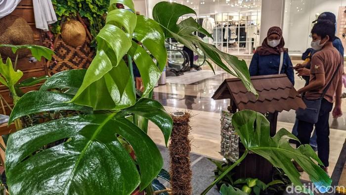 Pengunjung pusat perbelanjaan melihat koleksi tanaman pada pameran tanaman hias 'Aquascaping Contest & Expo' di Trans Studio Mall (TSM) Cibubur, Sabtu (12/6/2021). Menurut data Asosiasi Bunga Indonesia (ASBINDO), peningkatan permintaan bunga hias mencapai 65 persen pada masa pandemi 2020.