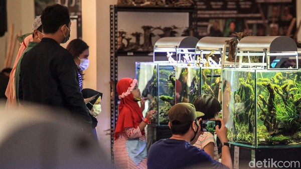 Pengunjung melihat-lihat aquascape yang dipamerkan.