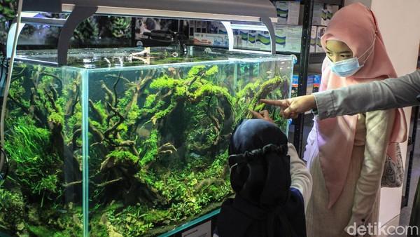 Pengunjung akan dimanjakan dengan kehidupan ekosistem di dalam akuarium.