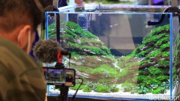 Aquascape terlihat indah dengan adanya beragam tanaman dan ikan hias.