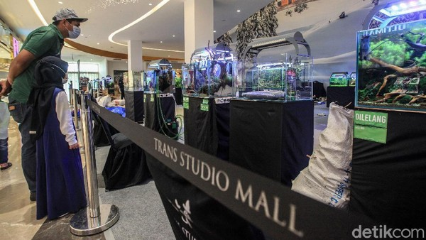 Pengunjung pusat perbelanjaan melihat dengan detil karya para scaper dalam pameran Aquascaping Contest & Expo.