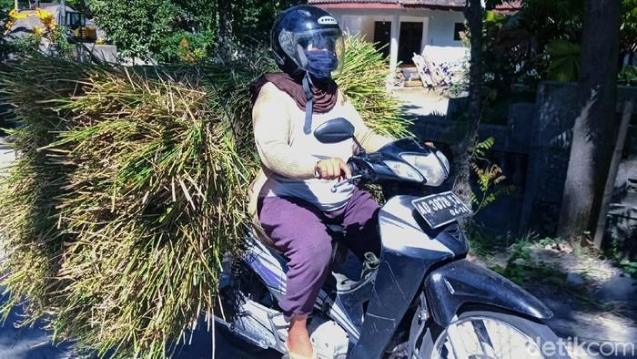 Musim kemarau telah memaksa ibu-ibu rumah tangga di desa-desa kawasan Gunung Merapi, Kecamatan Kemalang, Klaten bekerja mencari pakan ternak sapi mereka. Ada yang mengendarai sepeda motor atau naik bus, kemudian kembali mencegat truk pencari pasir yang akan melintas desa mereka. Wanita wanita itu berangkat pagi secara berombongan dan pulang sore hari ke lokasi yang jauh.