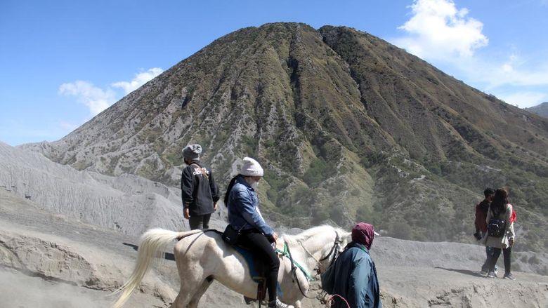 Pemilik mengantarkan pengunjung berkuda di Gunung Bromo, Probolinggo, Jawa Timur, Minggu (13/6/2021). Para pemilik kuda tersebut menawarkan jasanya kepada wisatawan yang ingin menuju puncak Gunung Bromo menggunakan kuda dengan tarif Rp50 ribu sampai Rp150 ribu. ANTARA FOTO/Umarul Faruq/foc.
