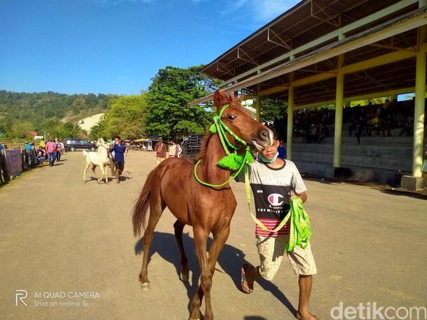Sebelumnya event dimulai, para pemilik kuda telah mempersiapkan kuda-kuda mereka jauh jauh hari, mulai dari perawatan, dengan memberi makan dan diberi jamu khusus agar kuda bisa kuat dan berlari dengan kencang.