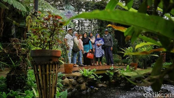 Orchid Forest Cikole Lembang juga menawarkan beberapa wahana yang bisa dikunjungi, salah satunya taman anggrek. Taman anggrek disini disebut-sebut sebagai taman anggrek terbesar di Indonesia lho.