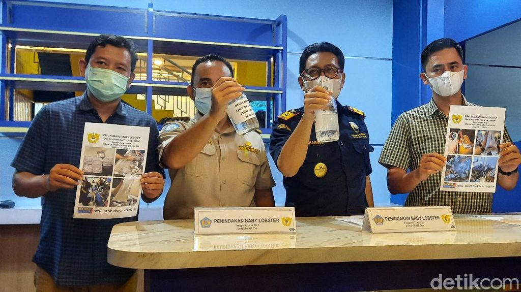 Bea Cukai Gagalkan Penyelundupan Benur Senilai 18,4 M di Palembang