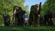 Taman di London Disulap Jadi Kebun Gajah, Ada Apa?