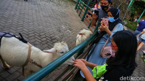 Diberi nama area Petting Zoo, anak-anak bisa mencoba untuk memberi makan hewan. Masih di kawasan yang sama, area ini juga memberikan atraksi reptil dan burung.