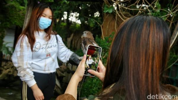 Dari anak-anak hingga dewasa bisa merasakan pengalaman untuk memegang burung hantu, sugar glider sampai bunglon. Atraksi ini diawasi oleh pawangnya langsung.