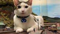 Keren! Restoran Ini Tak Jadi Bangkrut Setelah Bantu Kucing Jalanan