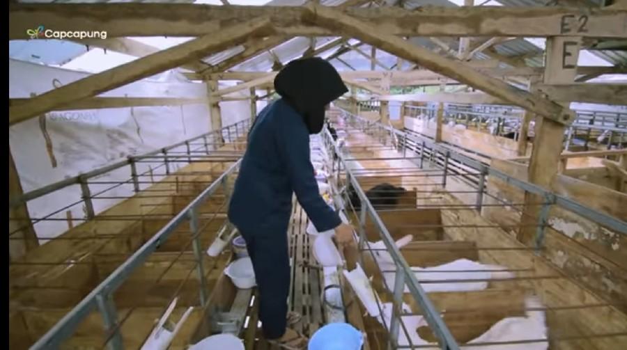 Kisah Sukses Petani dan Peternak Muda