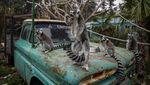 Krisis Pandemi Ancam Keselamatan Hewan di Kebun Binatang Chile