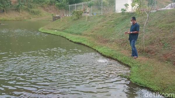 Ikan di embung ini cukup banyak. Pengunjung pun bisa memberi makan ikan dengan membeli pakan di warung sekitar sini.