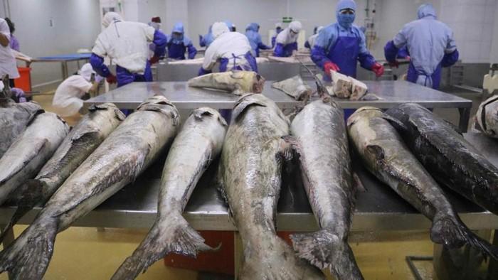 Pengolahan ikan