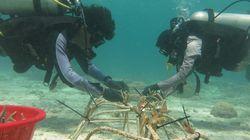 Jaga Ekosistem Laut, PLNBikin Transplantasi Terumbu Karang di Sultra
