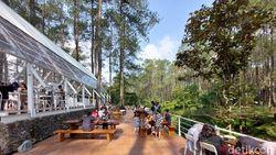Ngopi di Tengah Hutan Pinus Lembang? Ini Tempatnya