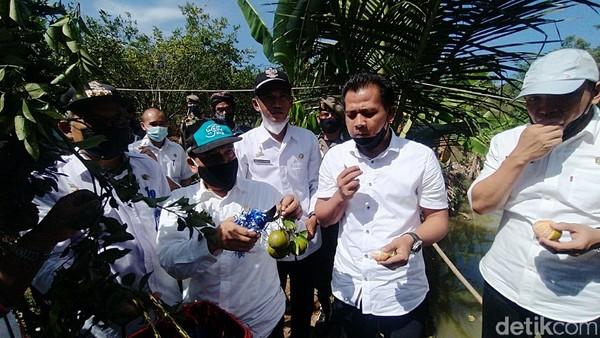 Wakil Bupati Ciamis Yana D Putra mengapresiasi destinasi wisata desa petik jeruk ini.(Dadang Hermansyah/detikcom)