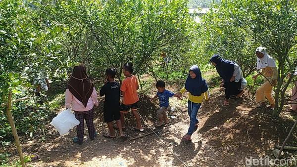 Wisata petik jeruk ini terletak di perkebunan Ladur, Cisinduk, Desa Janggala, Kecamatan Cidolog, Kabupaten Ciamis, Jawa Barat. (Dadang Hermansyah/detikcom)