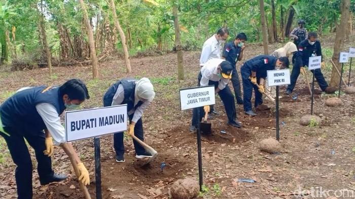 Gubernur Jatim Khofifah Indar Parawansa meninjau panen raya porang di Desa Klangon, Kecamatan Saradan, Madiun. Ia menyiapkan SK larangan ekspor katak (bibit porang).