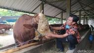 Daging dan Ternak dari Tulungagung Dilarang Masuk Blitar Jelang Idul Adha
