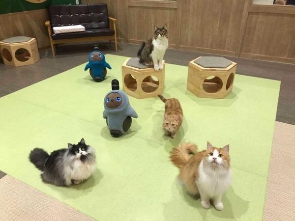 Berkunjung ke sini bisa untuk menemukan pelipur lara, bertemu kucing-kucing jinak dan robot Lovot yang menggemaskan.
