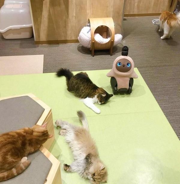 Di dalamnya ada dua Lovot dan lima kucing yang menunggu cintamu. Saat melihat mereka, siapa yang tidak akan jatuh hati?