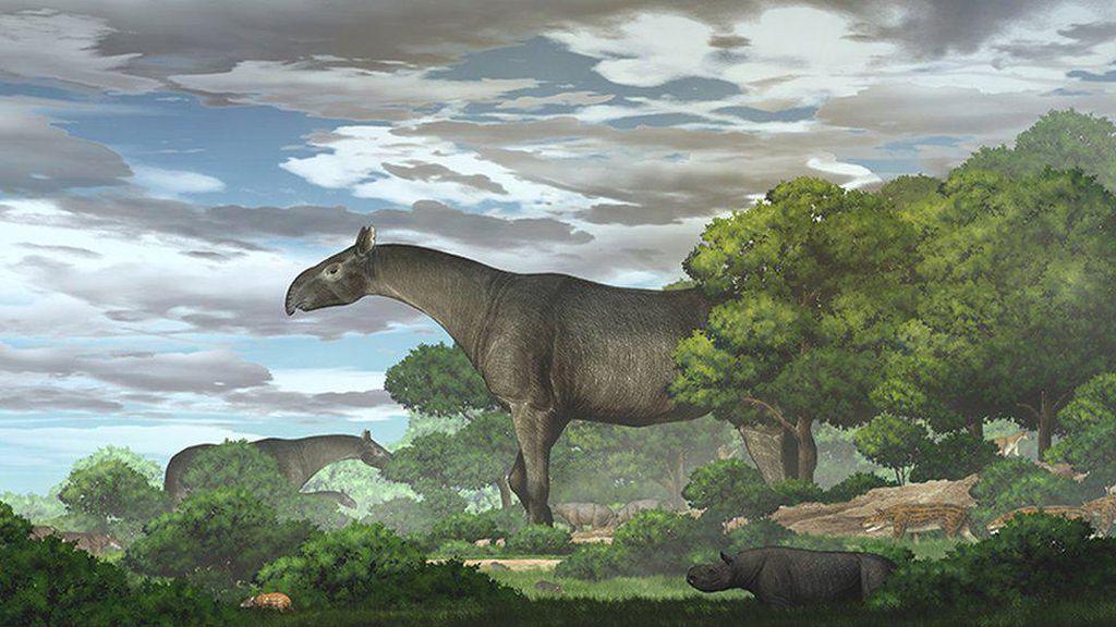Fosil Badak Raksasa dengan Berat 4 Kali Gajah Afrika Ditemukan di China