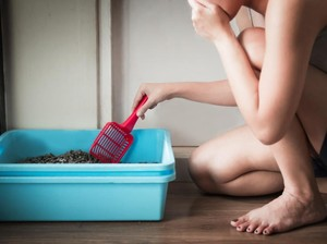 5 Penyebab Kotoran Kucing Bau dan Cara Mengatasinya