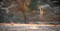 The Comedy Wildlife Photography