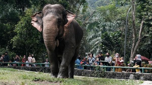 Pengunjung tampak tidak begitu ramai. Pada siang hari, pengunjung satu per satu mulai meninggalkan Ragunan.