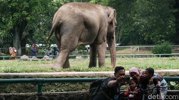Satwa yang paling menjadi sasaran pengunjung adalah pelikan, jerapah, dan gajah Sumatera.
