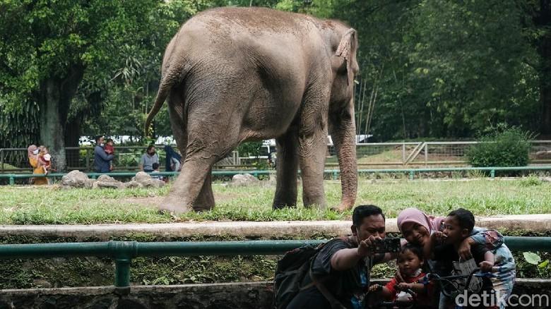 Taman Margasatwa Ragunan kerap dikunjungi wisatawan saat akhir pekan. Meski kasus COVID-19 di Ibu Kota meningkat, masih ada pengunjung yang berwisata ke Ragunan