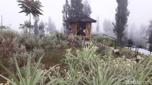 Kebun ini membudidayakan tiga jenis edelweis, yakni Anaphalis Javanica, Anaphalis Longifolia dan Anaphalis Viscida.