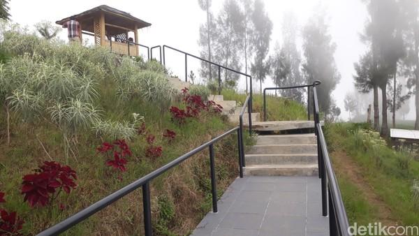 Kebun bunga abadi ini berada di desa pintu masuk Gunung Bromo dari arah Pasuruan.
