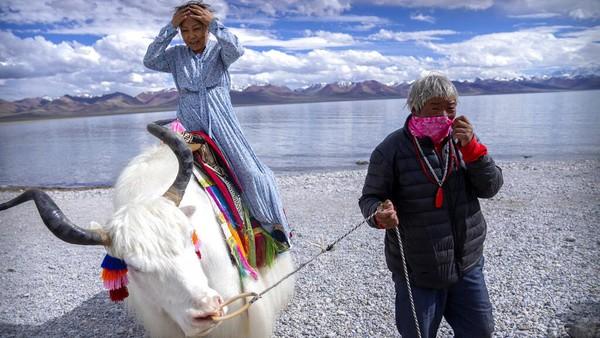 Seorang turis China menunggangi seekor Yak putih di Namtso, Daerah Otonomi Tibet China barat.