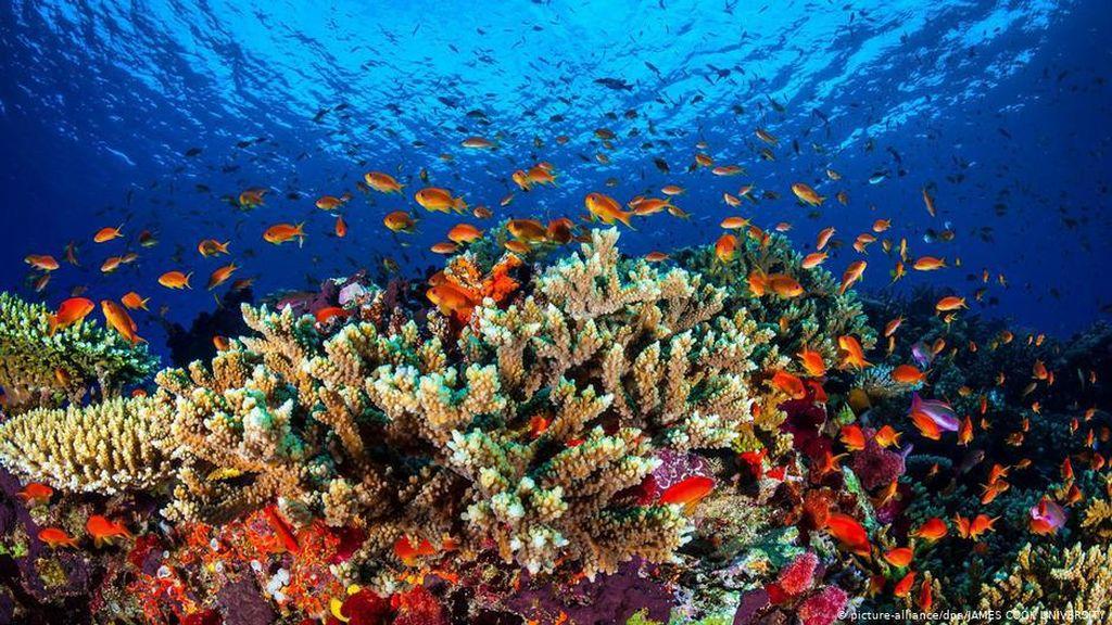 PBB Usulkan Great Barrier Reef Masuk Daftar dalam Bahaya, Australia Protes