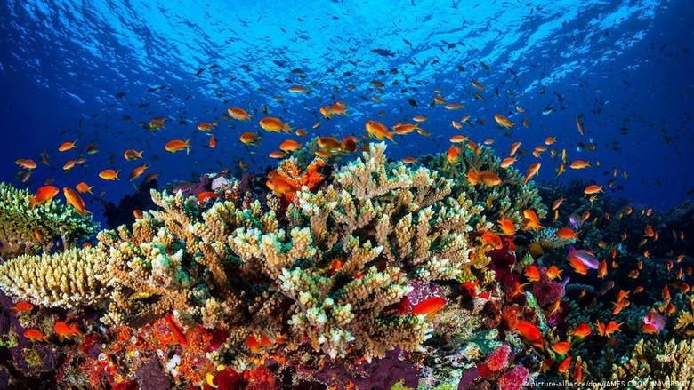 PBB Usulkan Great Barrier Reef Dimasukkan Daftar Dalam Bahaya, Australia Protes
