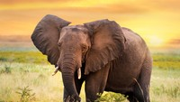 Ibu-ibu Kaget Banget, Dapurnya Diterobos Gajah Malam-malam