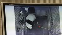 Hore!!! Bayi Panda Kembar Baru Saja Lahir, Nih