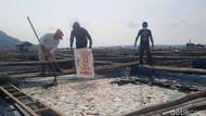 Fenomena Ikan Mati Mendadak Landa Petani Karamba Waduk Gajah Mungkur