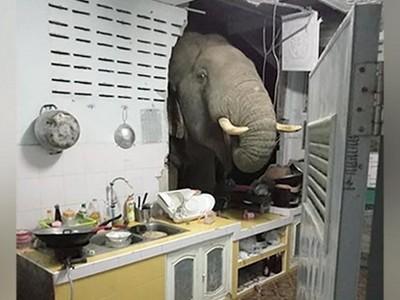 Oh No! Gajah Thailand yang Pernah Jebol Dapur Warga, Berulah Lagi