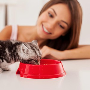 3 Mitos Makanan Kucing, Pemilik Anabul Wajib Tahu