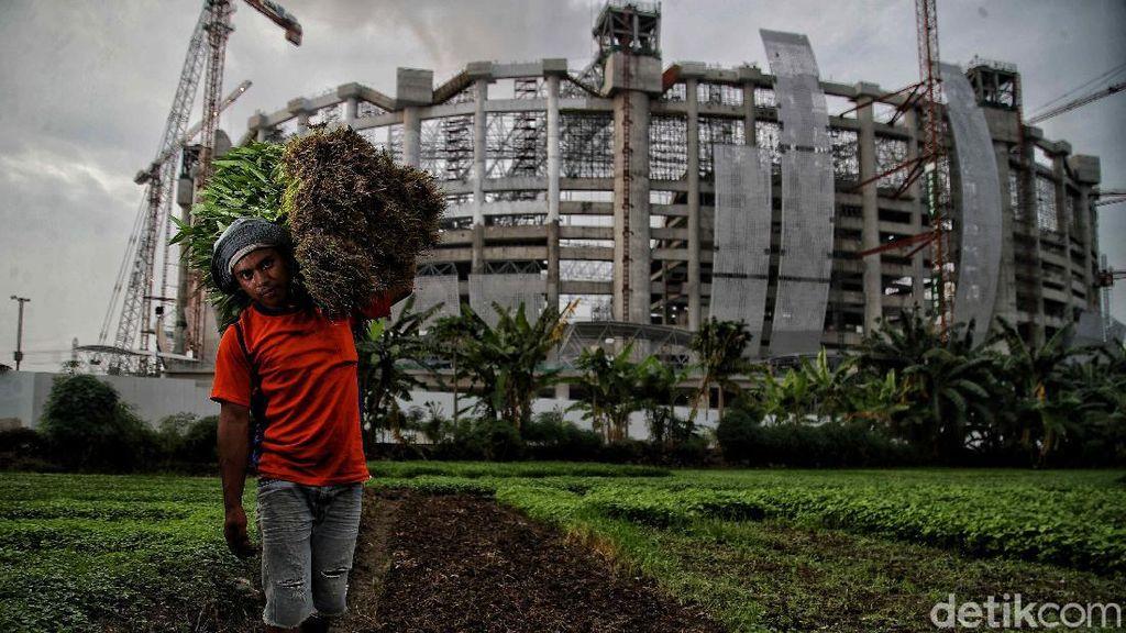 Petani Ibu Kota Jatuh Bangun Bertahan Dihantam Pandemi Corona