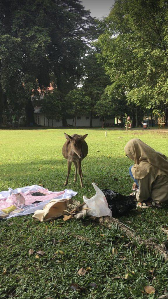 Ngakak! Niat Piknik Cantik, Makanan Wanita Ini Malah Dicuri Angsa dan Rusa