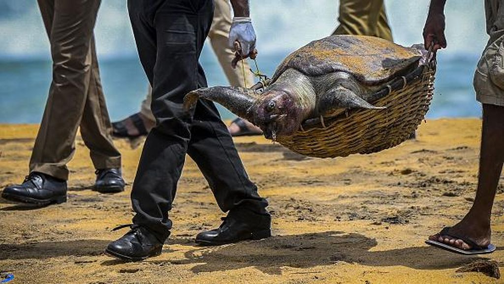 So Sad, Hewan-hewan Ini Mati Gegara Tumpahan Bahan Kimia